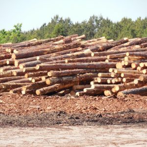 Clean-up of Wood By-products